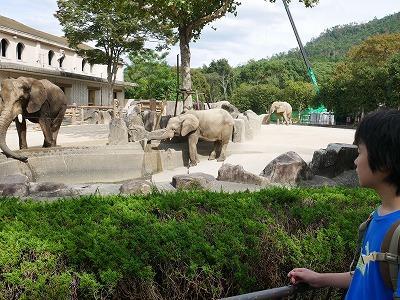 象を見ている児童