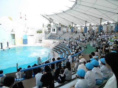 須磨水族園でのイルカショー