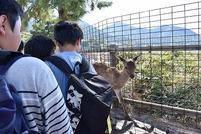 鹿がお出迎え