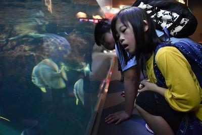 水族館でいろいろな魚を見ているところ