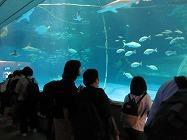 サメ、エイ、カメを見ている子どもたち
