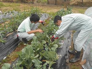 farm18a.jpg