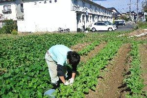 農作業の様子