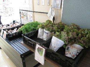 野菜も売っています。