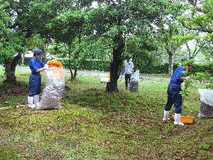 公園の清掃の様子
