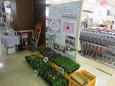 花壇苗の販売
