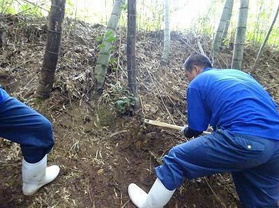 たけのこを掘っているところの様子